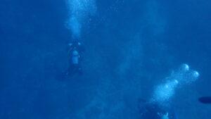 串本ファンダイビング水中
